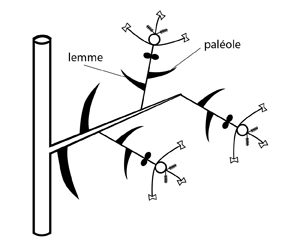 paléole