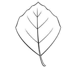rhomboïdal